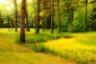 Dreamy Meadow Art Print
