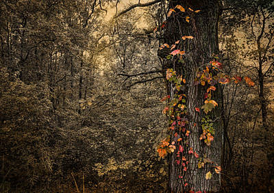 Photograph - Dressed For Fall by Robin-Lee Vieira