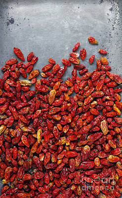 Chili Pepper Photograph - Dried Chili Peppers by Carlos Caetano