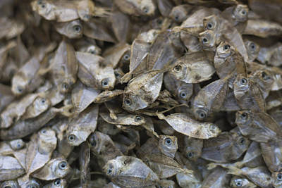 Photograph - Dried Fish At The Market by Zoe Ferrie