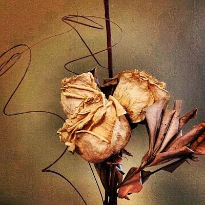 Bouquet Photograph - Dried Roses. (from My Wedding Bouquet) by Jess Gowan