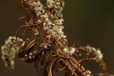 Photograph - Dried Weed by Scott Hovind