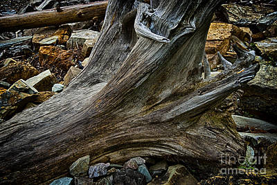 Drift Wood One Art Print by Rick Bragan