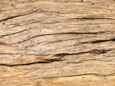 Photograph - Drift Wood Pattern by Yali Shi