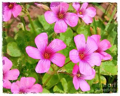 Dappled Light Photograph - Drifts Of Oxalis by Judi Bagwell