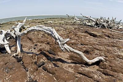 Dead Tree Trunk Digital Art - Driftwood by Glennis Siverson
