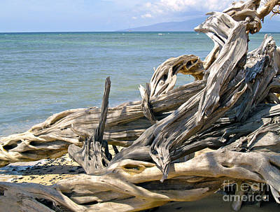 Photograph - Driftwood II by Patricia Griffin Brett