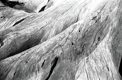 Driftwood, Jekyll Island, Georgia Art Print by Jason Quick