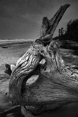Driftwood On Beach Art Print