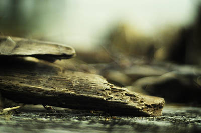 Photograph - Driftwood by Rebecca Sherman