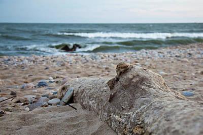 Photograph - Driftwood by Sara Hudock