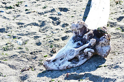Photograph - Driftwood by Traci Cottingham