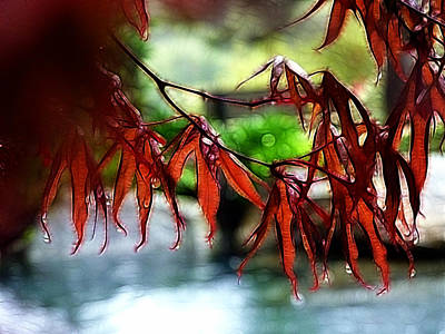Photograph - Dripping Fall Leaves by Cindy Wright