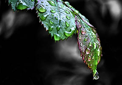 Pour Photograph - Dripping Wet by Karen M Scovill