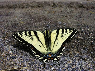 Outerspace Patenets Rights Managed Images - Driveway Butterfly Royalty-Free Image by Sherman Perry
