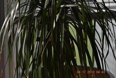 Drooping Tree Leaves Art Print by Heidi Frye