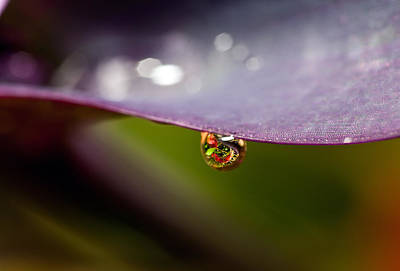 Y120831 Photograph - Drop Of Water by Pablo Reinsch Photography