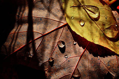 Photograph - Droplets by Emily Stauring