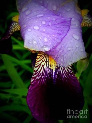Droplets On Flower Art Print by Deborah Selib-Haig DMacq