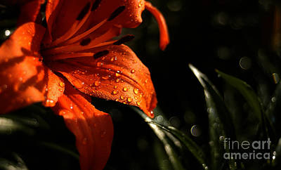 Art Print featuring the photograph Droplets On Flower by Vilas Malankar