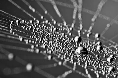 Drops In Spiderweb Art Print by Odon Czintos
