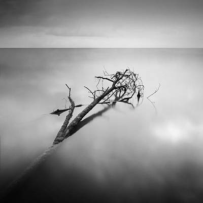 Incapacitated Photograph - Dry Branches by Teerapat Pattanasoponpong