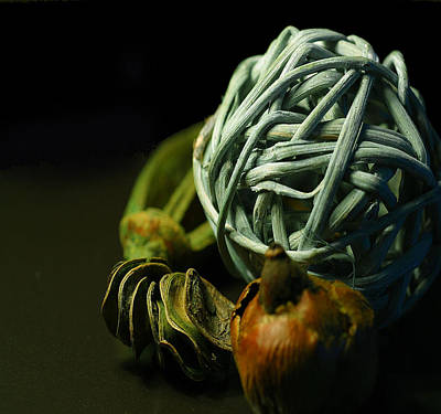 Dried Hydrangeas Photograph - Dry Flower 2 by Davor Sintic