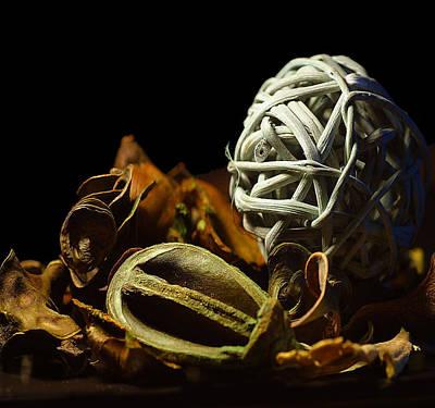 Dried Hydrangeas Photograph - Dry Flower by Davor Sintic