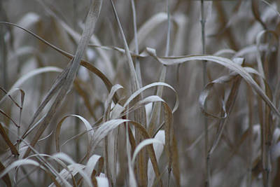 Photograph - Dry Grass by Cathie Douglas