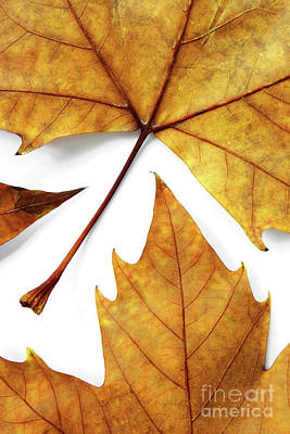Element Photograph - Dry Leafs by Carlos Caetano