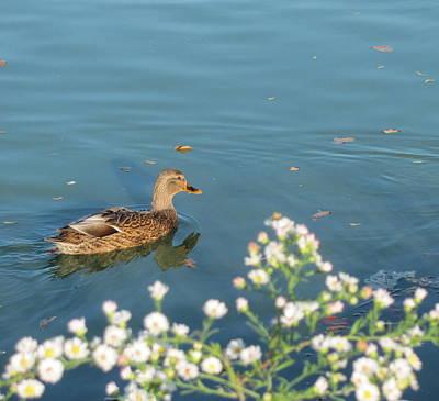 Photograph - Duck 6 by Anita Burgermeister