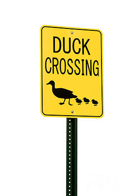 Duck Crossing Sign Print by Blink Images