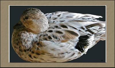 The View Mixed Media - Duck by Debra     Vatalaro