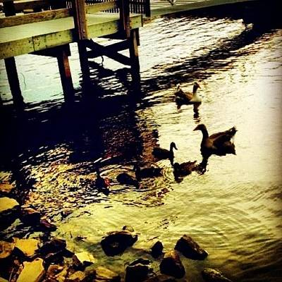Rock Photograph - #duck #dusk #cute #family #summer by Katie Williams