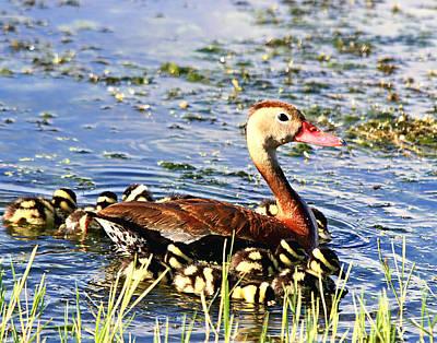 Photograph - Duck Family by Ira Runyan