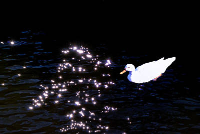 Photograph - Duck In The Spotlight by Kelly Reber