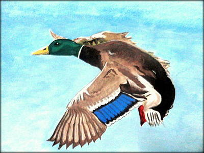 Painting - Duck by Poornima M