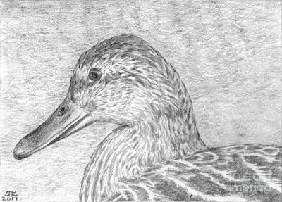 Duck Water Pencil Drawing - Duck Portrait by James Leonard