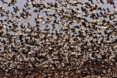 Photograph - Duck Wall by Edward Peterson