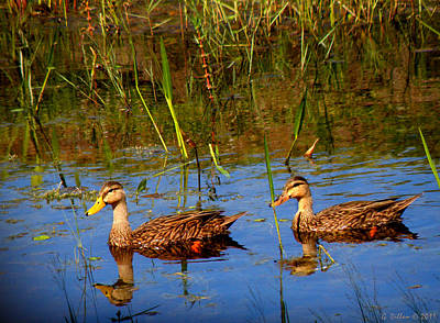 Ducks Afloat Art Print