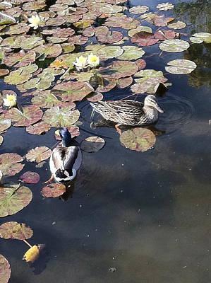 Keck Photograph - Ducks At Alice Keck Park by Helen Rivera