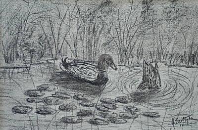 Lily Pad Pond Drawing - Ducks Fishing by Jason Sotzen