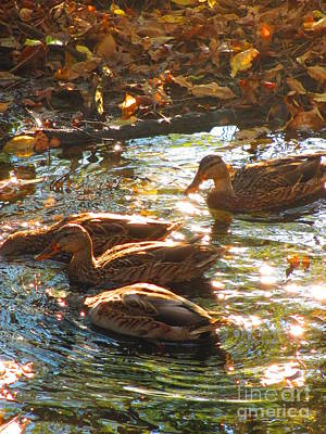 Photograph - Ducks On The Pond by Andrew Hench