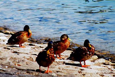Nature Photograph - Ducks  by Pravine Chester