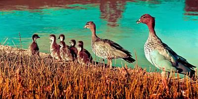 Ducky Family Art Print by Bernard Yong