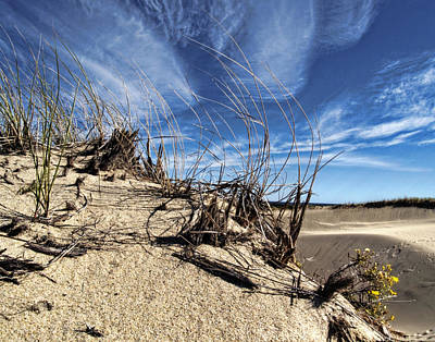 Photograph - Dune Grasses by Tammy Wetzel