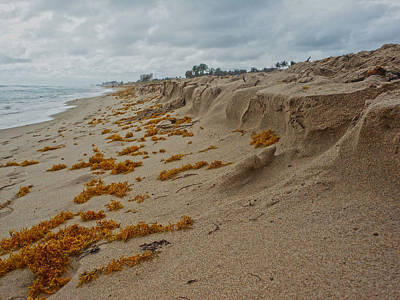 Photograph - Dune by Pete Rems