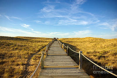 Silica Photograph - Dune Walkway by Carlos Caetano