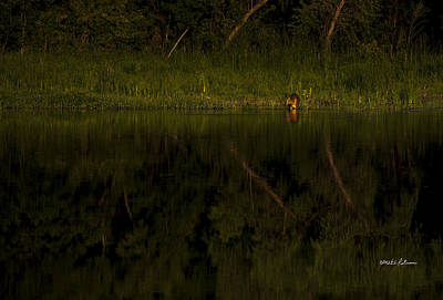 Photograph - Dusk In The Wild by Edward Peterson