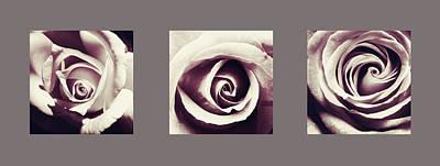 Photograph - Dusk Roses by Sumit Mehndiratta